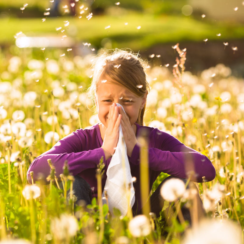 allergologia adulti pediatrica allergie bambini novara