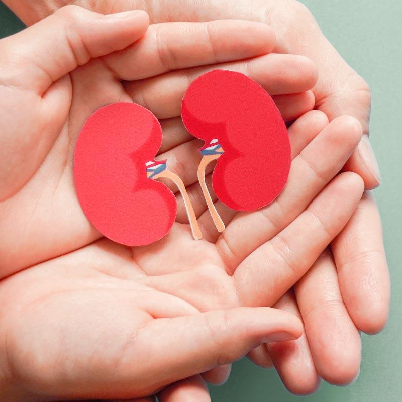 nefrologia cura dei reni nefrologo novara